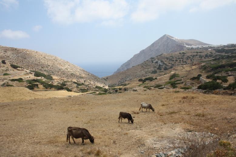 Folegandros north